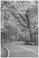 Rood, curve, fall colors, West Mountain. Hot Springs National Park ( black and white)