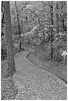 Built trail and fall colors, Hot Spring Mountain. Hot Springs National Park ( black and white)
