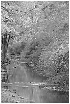 Stream and trees in fall colors, Gulpha Gorge. Hot Springs National Park ( black and white)