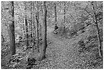 Trail and trees in fall colors, Gulpha Gorge. Hot Springs National Park ( black and white)