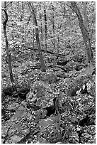 Boulders and trees in fall foliage, Gulpha Gorge. Hot Springs National Park ( black and white)