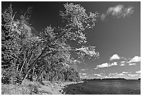 Poplar, coast on Rock Harbor trail. Isle Royale National Park, Michigan, USA. (black and white)