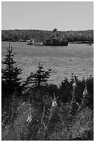 Fireweed, inlet, and forest, Caribou Island. Isle Royale National Park ( black and white)