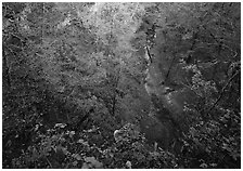 Forest in karstic depression. Mammoth Cave National Park ( black and white)