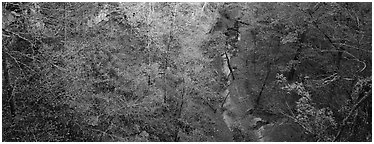 Forest and stream seen from above. Mammoth Cave National Park (Panoramic black and white)