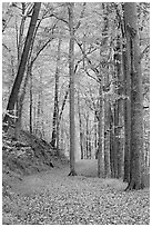 Trail in autumn forest. Mammoth Cave National Park ( black and white)