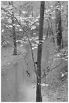 Trees with yellow leaves and Styx river during rain. Mammoth Cave National Park ( black and white)