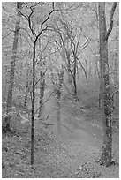 Styx stream and forest in fall foliage during rain. Mammoth Cave National Park ( black and white)