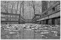 Wet boardwalk during rain. Mammoth Cave National Park ( black and white)