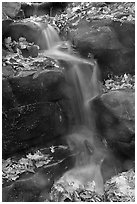 Stream, boulders, and fallen leaves. Mammoth Cave National Park ( black and white)