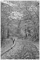 Paved trail and forest in fall foliage. Mammoth Cave National Park ( black and white)