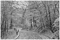 Trail leading to historic cave entrance in the fall. Mammoth Cave National Park ( black and white)