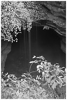 Entrance shaft and rain-fed water drip. Mammoth Cave National Park ( black and white)