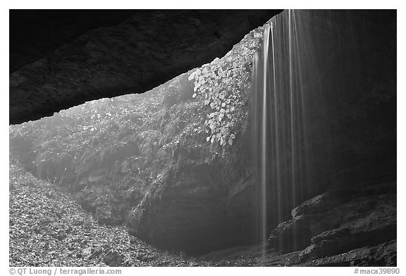 Rain-fed waterfall seen from inside cave. Mammoth Cave National Park (black and white)