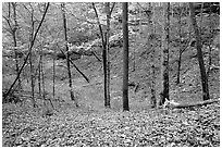 Forest in fall inside sinkhole. Mammoth Cave National Park ( black and white)