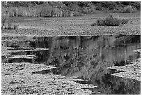 Reflections, Sloans Crossing Pond. Mammoth Cave National Park ( black and white)