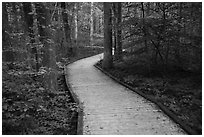 Boardwalk, Sloans Crossing Pond. Mammoth Cave National Park ( black and white)