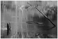 Snags and reflections, Green River. Mammoth Cave National Park ( black and white)
