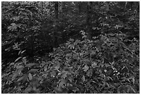 Summer wildflowers and forest. Mammoth Cave National Park ( black and white)
