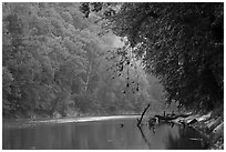 Green River and fog, Dennison Ferry. Mammoth Cave National Park ( black and white)