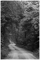 Unpaved Dennison Ferry Road. Mammoth Cave National Park ( black and white)