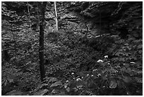 Wildflowers and sinkhole near Turnhole Bend. Mammoth Cave National Park ( black and white)