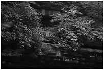 Limestone ledges with summer wildflowers. Mammoth Cave National Park ( black and white)