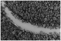 Aerial view of Green River and forest looking down. Mammoth Cave National Park ( black and white)