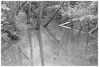 Trees and reflections in Echo River Spring. Mammoth Cave National Park ( black and white)