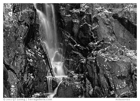Cascade over dark rock with with fallen leaves. Shenandoah National Park (black and white)