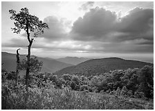Tree and overlook in the spring. Shenandoah National Park ( black and white)