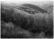 Trees and hills in the spring, late afternoon, Hensley Hollow. Shenandoah National Park ( black and white)