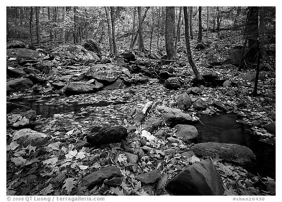 Forest floor, boulders, and trees in fall. Shenandoah National Park (black and white)