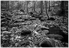 Forest floor, boulders, and trees in fall. Shenandoah National Park ( black and white)