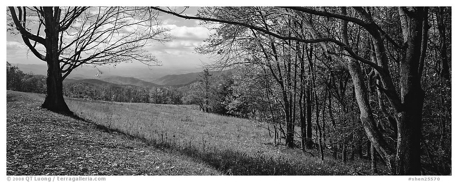 Clearing with trees in autumn colors and distant ridges. Shenandoah National Park (black and white)