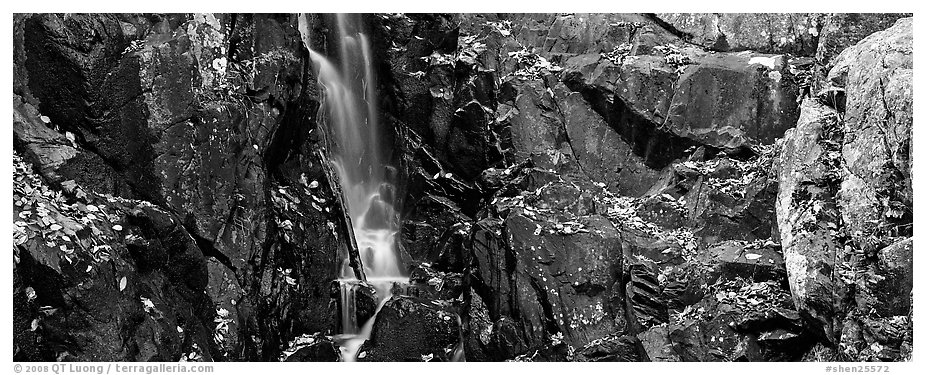 Cascade over dark rocks sprinkled with fallen autumn leaves. Shenandoah National Park (black and white)