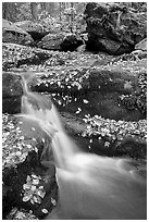 Creek and mossy boulders in fall with fallen leaves. Shenandoah National Park ( black and white)