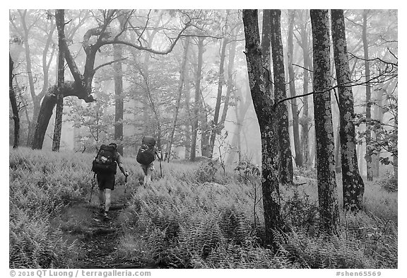 Appalachian Trail backpackers in foggy forest. Shenandoah National Park (black and white)