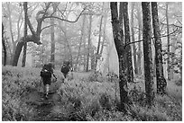 Appalachian Trail backpackers in foggy forest. Shenandoah National Park ( black and white)