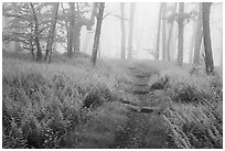 Appalachian Trail in foggy forest at springtime. Shenandoah National Park ( black and white)