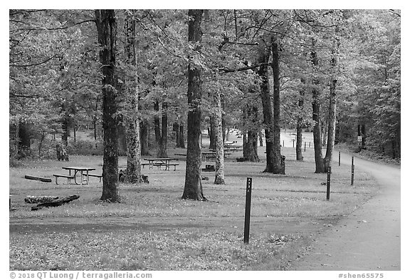Matthews Arm Campground. Shenandoah National Park (black and white)