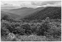 Jewell Hollow Overlook in spring. Shenandoah National Park ( black and white)