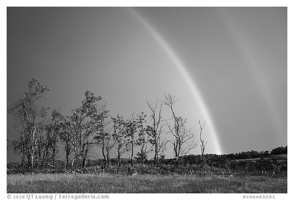 Double rainbow and trees, Big Meadows. Shenandoah National Park (black and white)