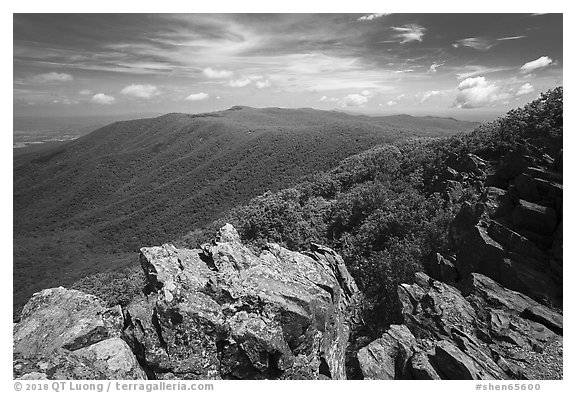 View from Hawksbill Mountain. Shenandoah National Park (black and white)
