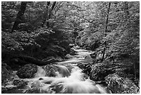 Robinson River in the spring. Shenandoah National Park ( black and white)