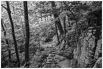 Whiteoak Canyon Trail. Shenandoah National Park ( black and white)