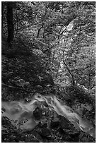 Converging Waterfalls in Whiteoak Canyon. Shenandoah National Park ( black and white)