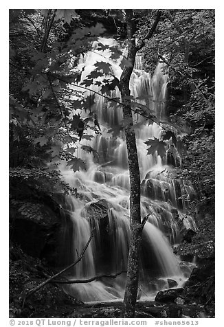 Trees and waterfall, Whiteoak Canyon. Shenandoah National Park (black and white)