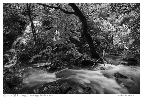 Multiple waterfalls and Robinson River, Whiteoak Canyon. Shenandoah National Park (black and white)