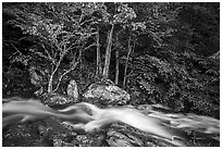 Cascades of the Robinson River at dusk. Shenandoah National Park ( black and white)